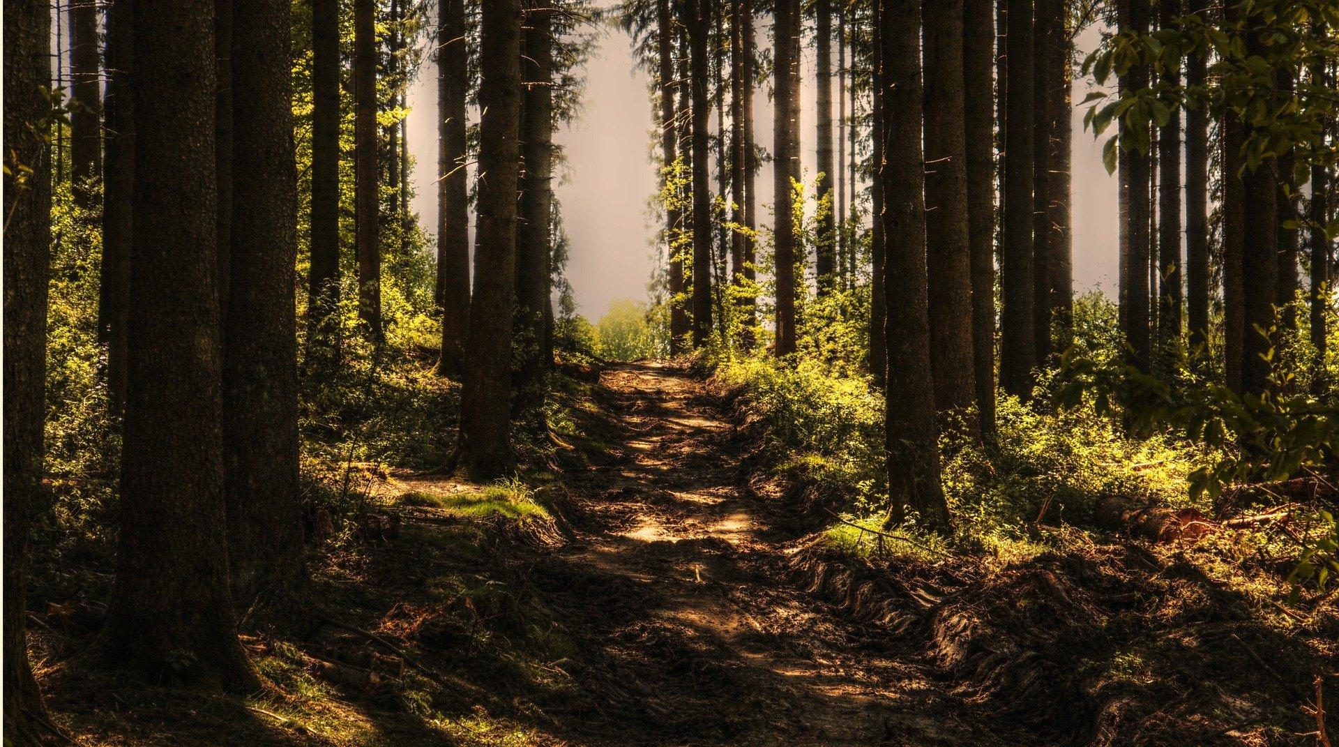 Was brauche ich in der Waldwoche?
